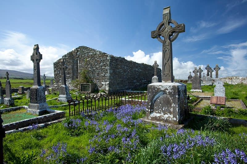 Bluebells beside the old church, Aughris, Co Sligo, Ireland.