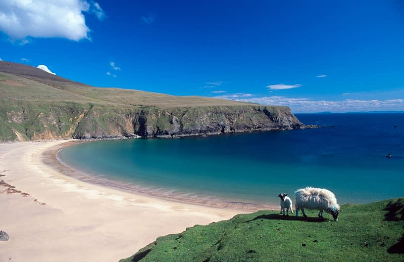 Sheep grazing near Sliver Strand, Malin Beg, Co Donegal, Ireland.