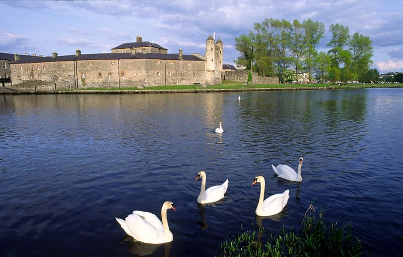 Swans in front of Enniskillen Castle, Enniskillen, Co Fermanagh, Northern Ireland.