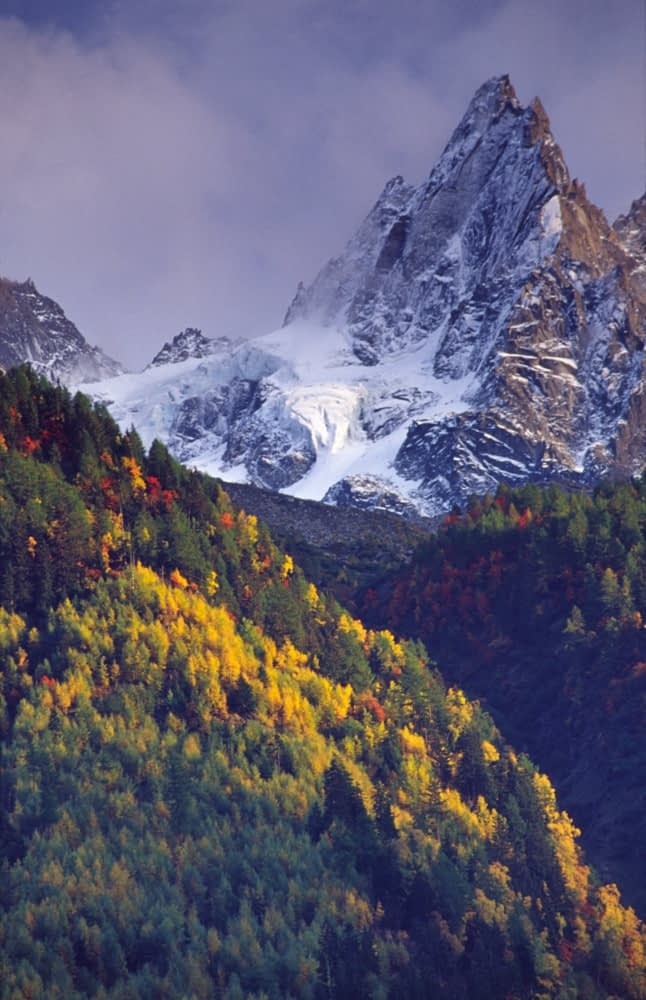 Autumnal forest beneath the Chamonix Aiguilles, French Alps, France.