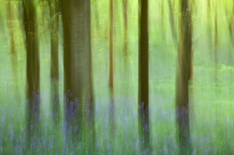 Impression of bluebells and beech woodland, Portglenone Forest, County Antrim, Northern Ireland.