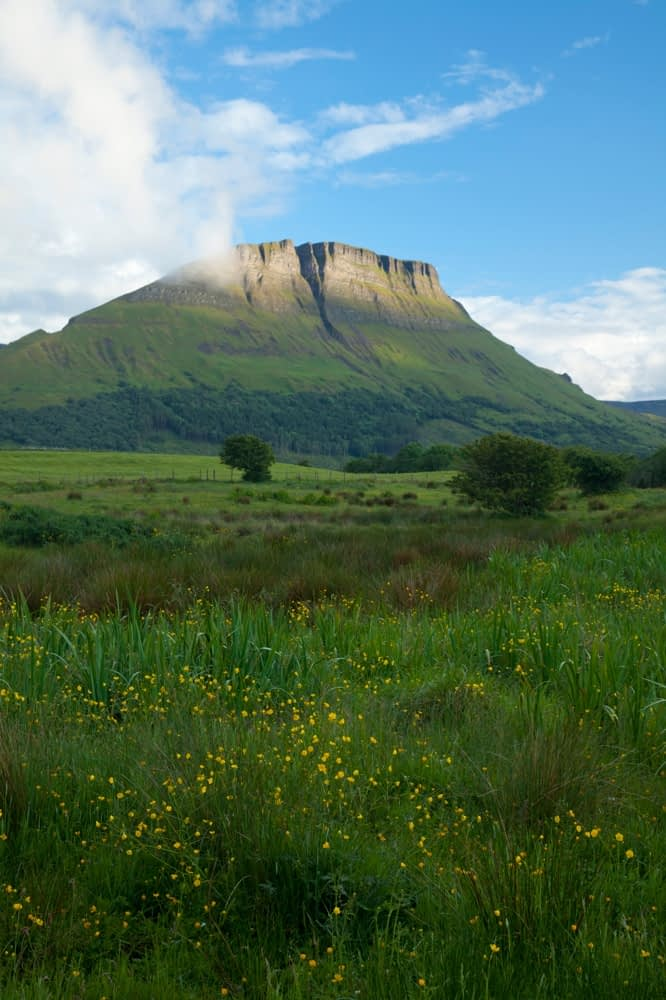 Wildflower meadow beneath Benwiskin mountain, Co Sligo, Ireland.