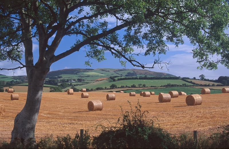 Straw bales in a field after harvest, Co Donegal, Ireland.