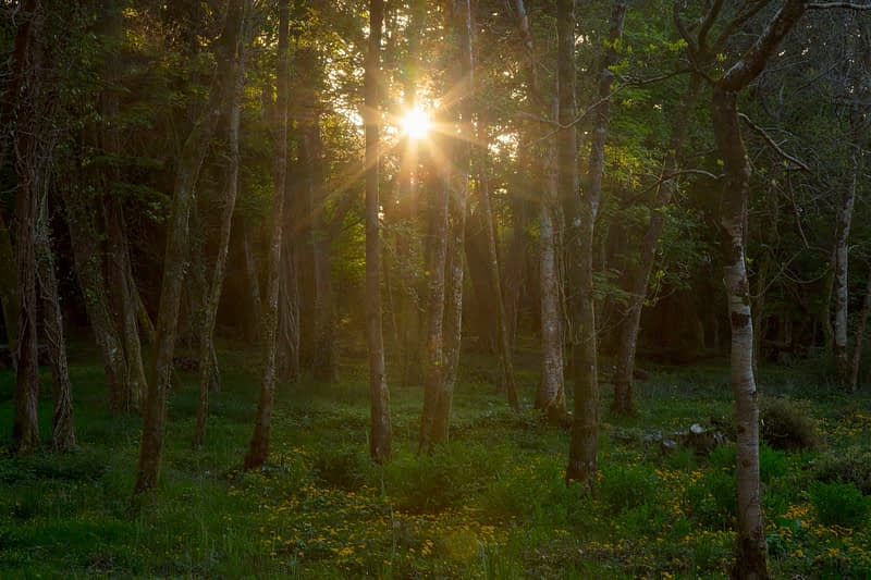 Woodland sunset on Inchagoill Island, Lough Corrib, County Galway, Ireland.
