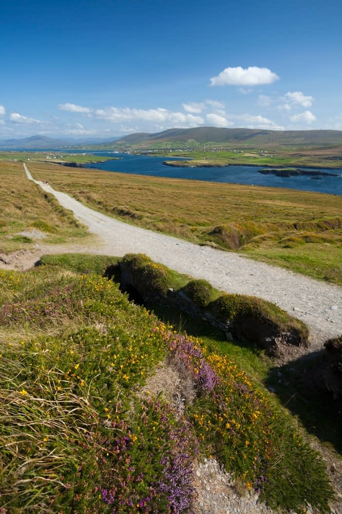 Track leading to Bray Head, Valentia Island, County Kerry, Ireland.