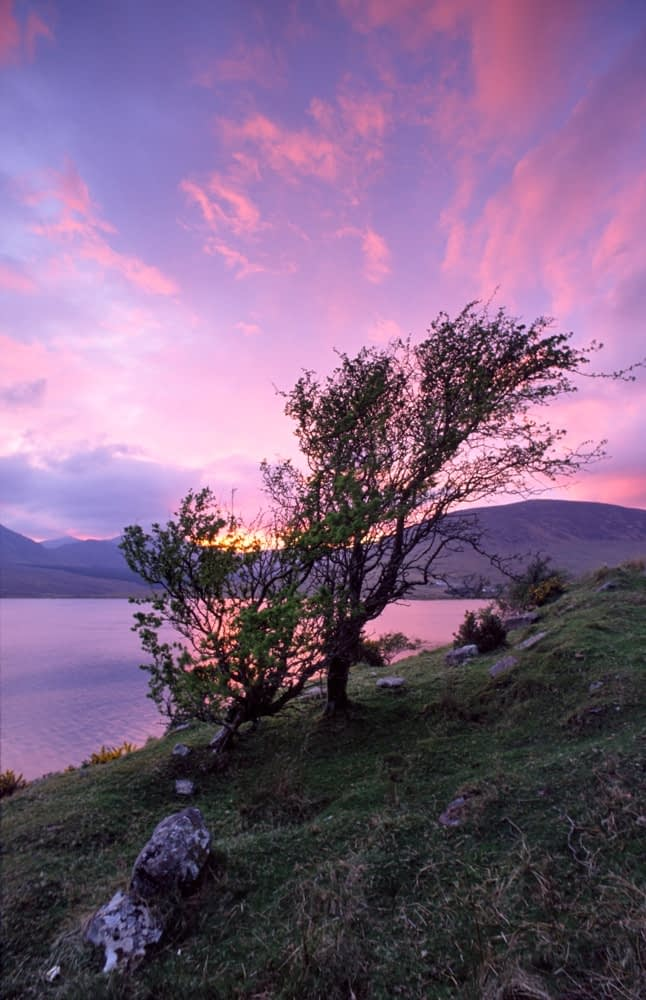 Lough Feeagh and hawthorn tree at sunset, Nephin Beg Mountains, Co Mayo, Ireland.