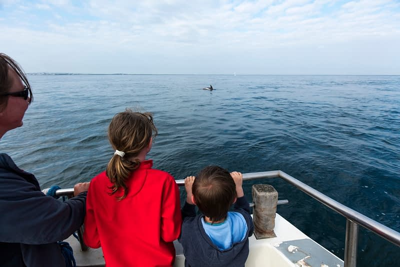 Dolphin watching near the Saltee Islands, County Waterford, Ireland.