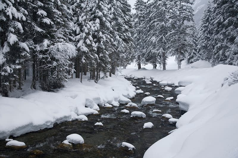 Winter stream and trees, Ischgl, Tirol, Austria