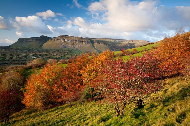 Autumn berries and Benbulbin, Glencar, Co Sligo, Ireland.