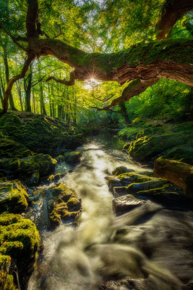 Morning sun illuminates the Shimna River, Tollymore Forest Park, County Down, Northern Ireland.