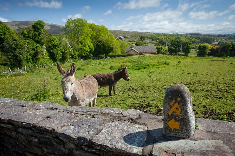 Marker stone for the Sheep's Head Way, Sheep's Head, Co Cork, Ireland.