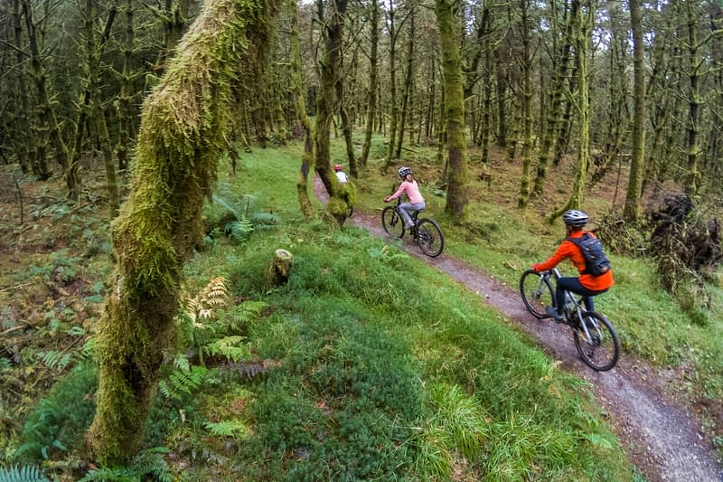 Cyclists on the Ballyhoura Forest mountain bike trail, County Limerick, Ireland.