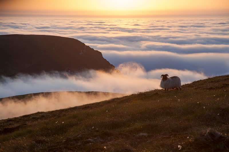 Sunset clouds and sheep, Glinsk mountain, North Mayo seacliffs, County Mayo, Ireland.