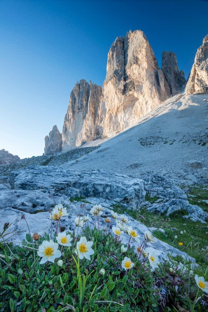 Mountain Aven beneath Tre Cime di Lavaredo, Sexten Dolomites, South Tyrol, Italy.