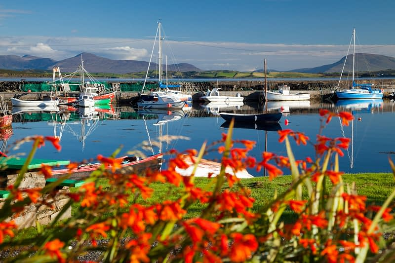Fishing boats and montbretia beside Murrisk harbour, Clew Bay, County Mayo, Ireland.