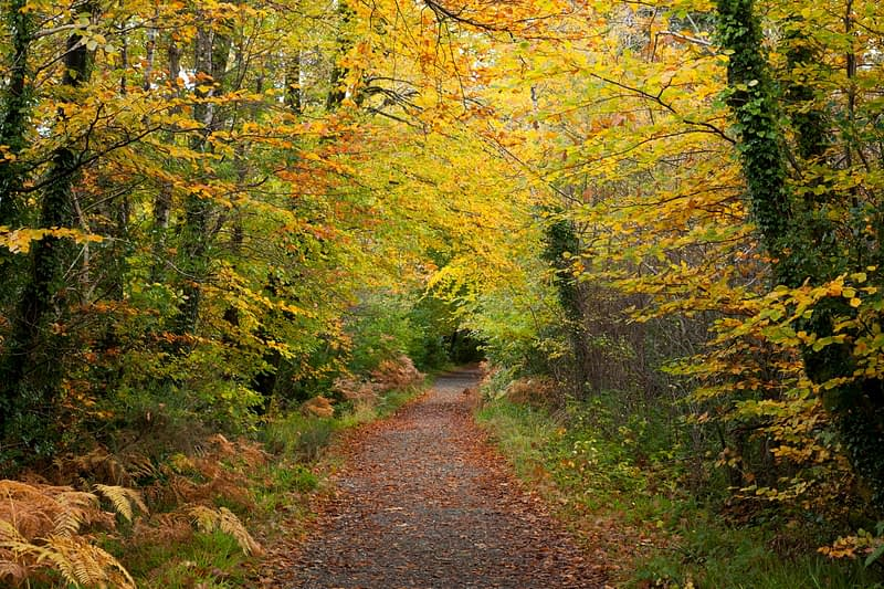 Autumn walking path in Tourmakeady Woods, County Mayo, Ireland.