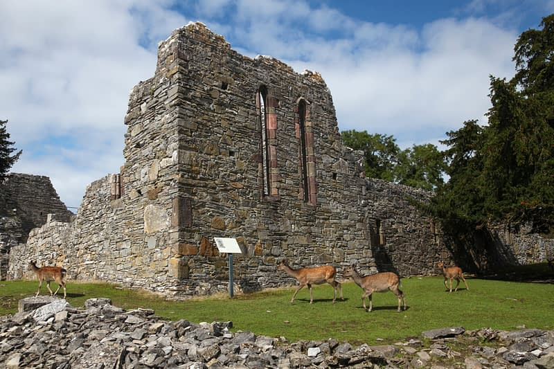Sika deer and abbey ruins on Innishfallen Island, Lough Leane, County Kerry, Ireland.