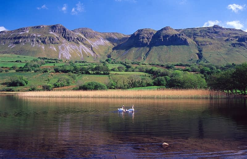 Swans on Glencar Lough beneath Castlegal Mountain, Co Sligo, Ireland.
