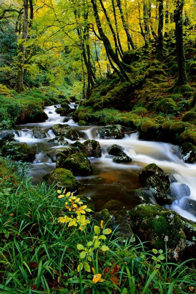 Beech wood and stream, Mullangore, Glenveagh National Park, Co Donegal, Ireland.