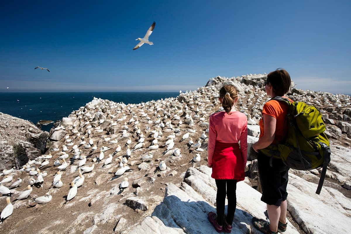 Visitors beside the gannet colony, Great Saltee Island, County Waterford, Ireland.