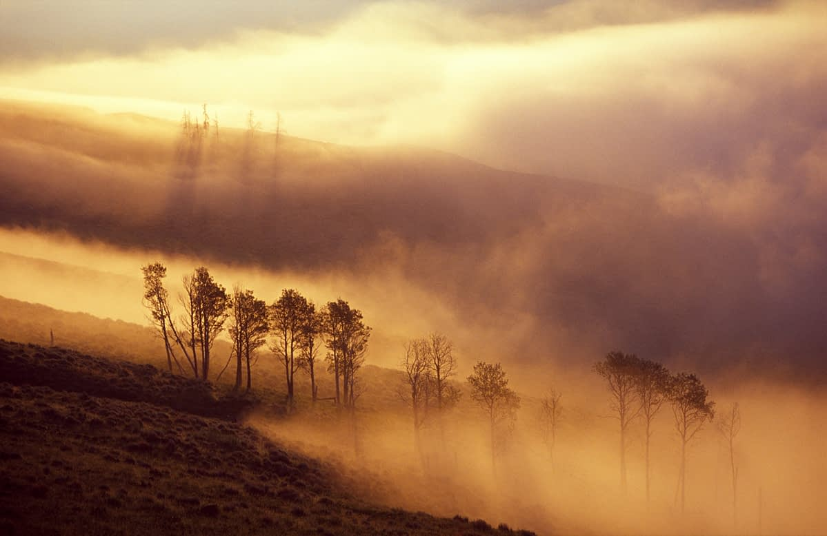 Dawn mist over Yellowstone National Park, Wyoming, USA.