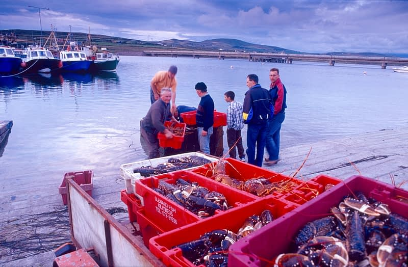 Fishermen landing a catch of lobsters, Portmagee harbour, Co Kerry, Ireland.