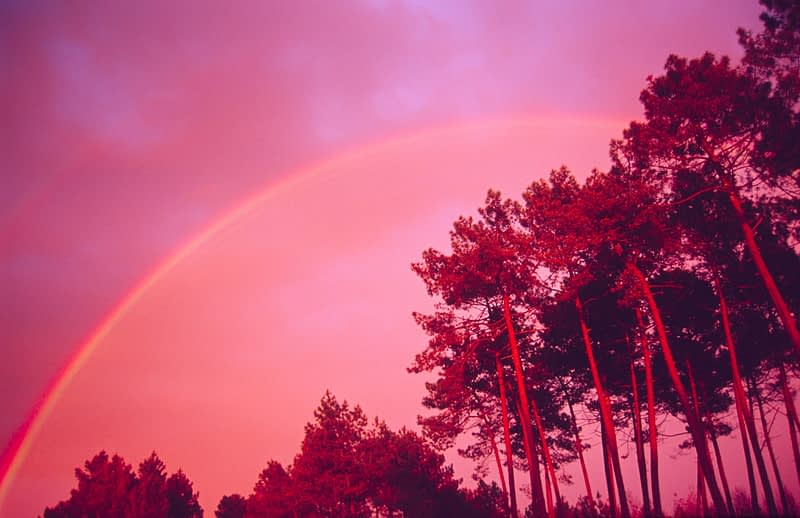 Pine trees and rainbow, Pays de Gascoigne, southwest France.