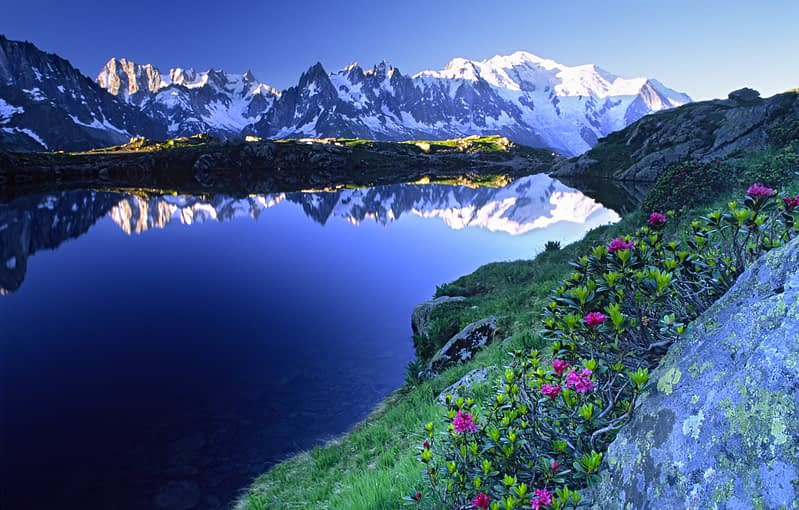 Alpine Rhododendron and the Mont Blanc massif reflected in Lac des Cheserys, French Alps, France.
