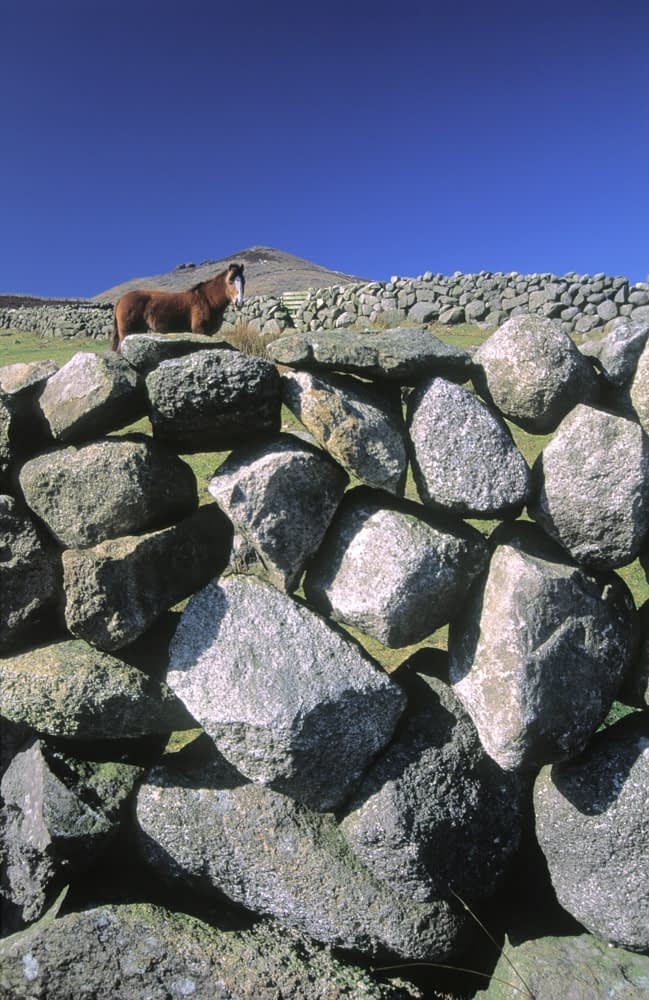 Horse peering over stone wall in the Mourne Mountains, Co Down, Northern Ireland.