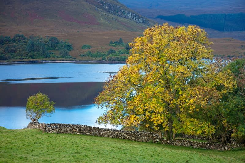 Autumn tree on the shore of Dunlewy Lough, County Donegal, Ireland.