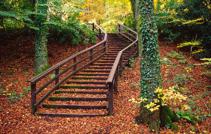 Autumn stairway in Castlecaldwell Forest, Co Fermanagh, Northern Ireland.