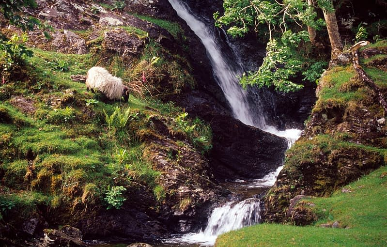 Sheep and waterfall, Connemara, Co Galway, Ireland.