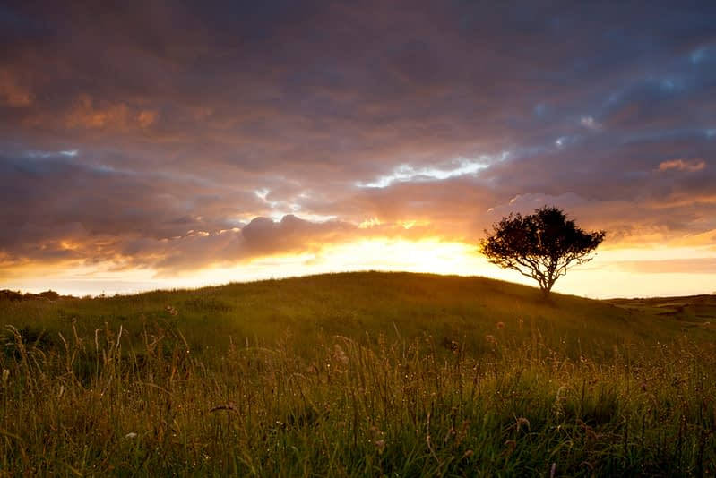 Lone tree at sunset, Co Mayo, Ireland.