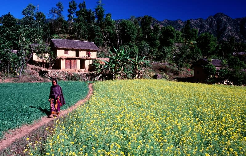 Tharu home and woman in a field of rape seed, Western Nepal.