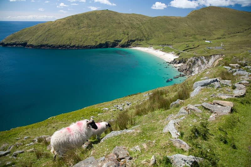 Sheep above Keem Strand, Achill Island, Co Mayo, Ireland.