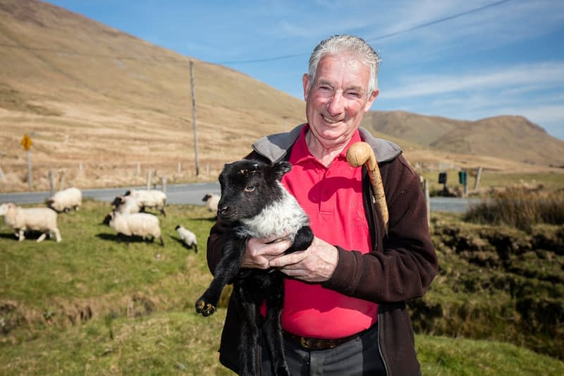 Hill farmer Michael Laffey with his flock, Maam Valley, County Mayo, Ireland.