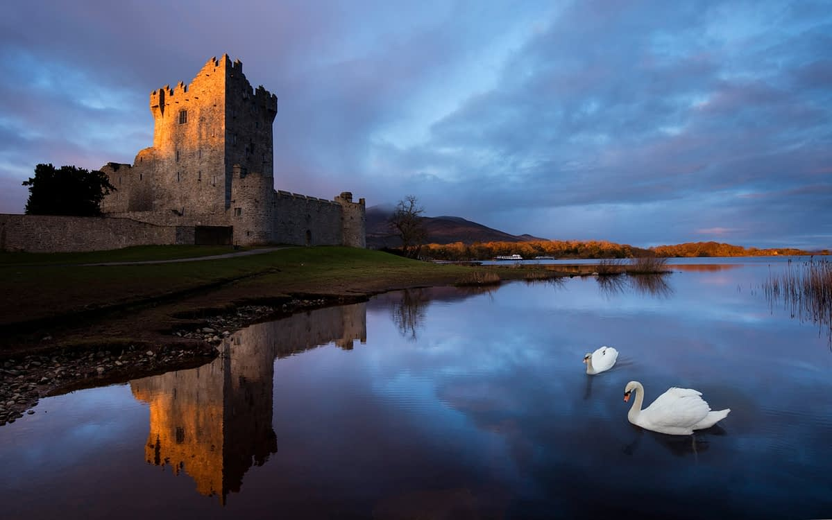 Swans and dawn reflection of Ross Castle, Killarney National Park, County Kerry, Ireland.