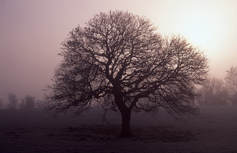 Tree silhouetted against winter mist, Co Donegal, Ireland.