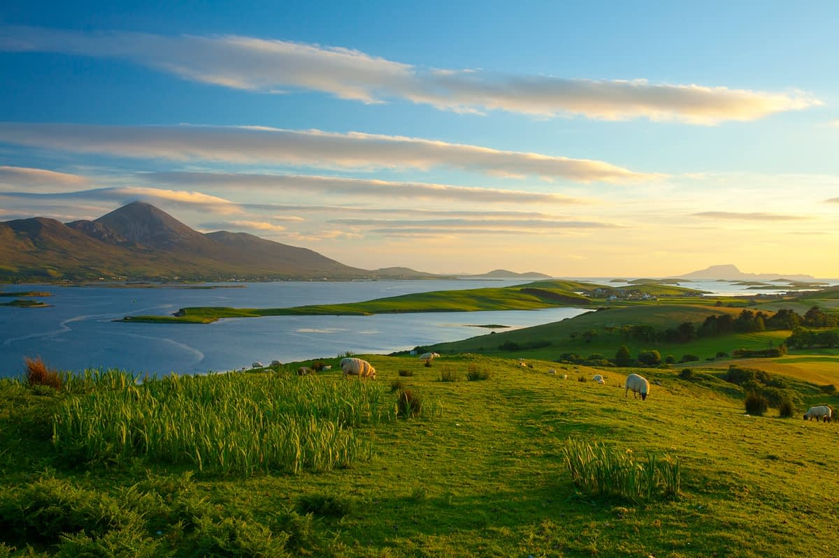 Sheep grazing beneath Croagh Patrick on the shore of Clew Bay, County Mayo, Ireland.