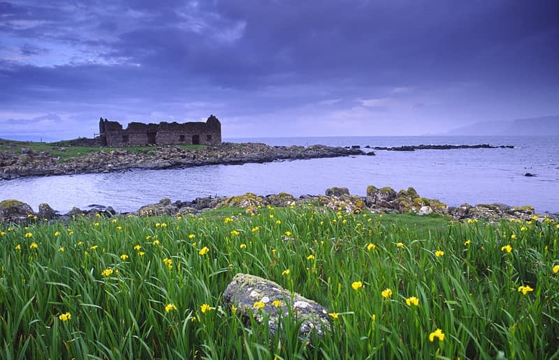 Flag Irises at Rue Point, Rathlin Island, Co Antrim, Northern Ireland.