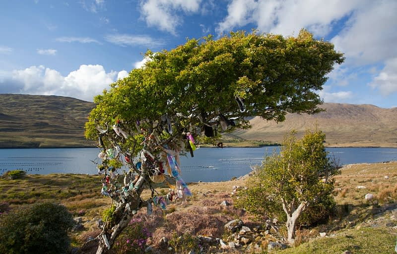 Fairy tree adorned with ribbons, Killary Harbour, Connemara, County Galway, Ireland.