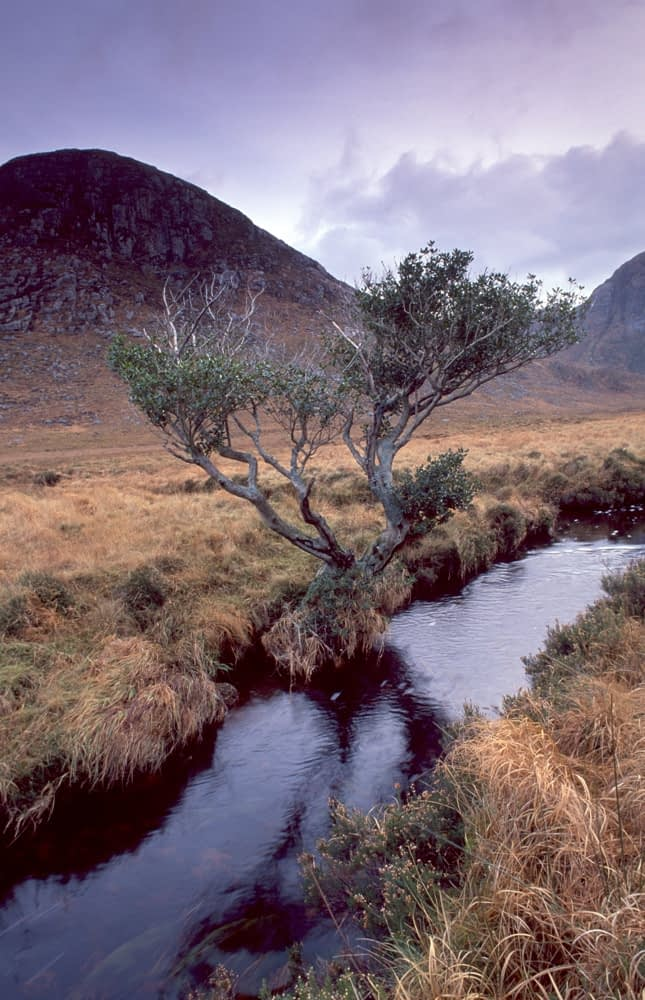 Twisted tree and stream in the Poisoned Glen, Co Donegal, Ireland.