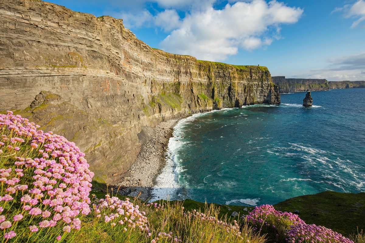 Thrift beneath the Cliffs of Moher, County Clare, Ireland.