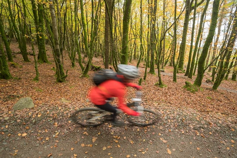 Autumn cyclist on the Ballyhoura Forest mountain bike trail, County Limerick, Ireland.
