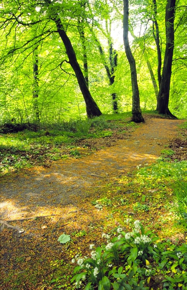 Sun-dappled path in Colin Glen, Belfast, Northern Ireland.