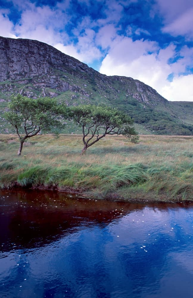 Trees beside the Owneveagh River, Glenveagh National Park, Co Donegal, Ireland.