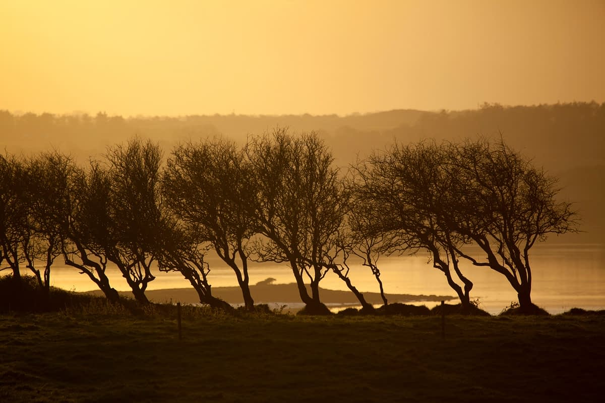 Trees silhouetted at sunset, River Moy, County Sligo, Ireland.
