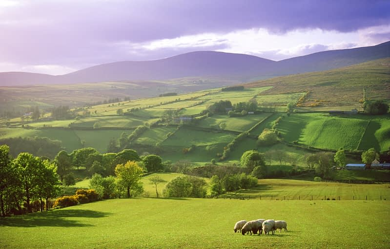 Summer evening in the Glenelly Valley, Co Tyrone, Northern Ireland.
