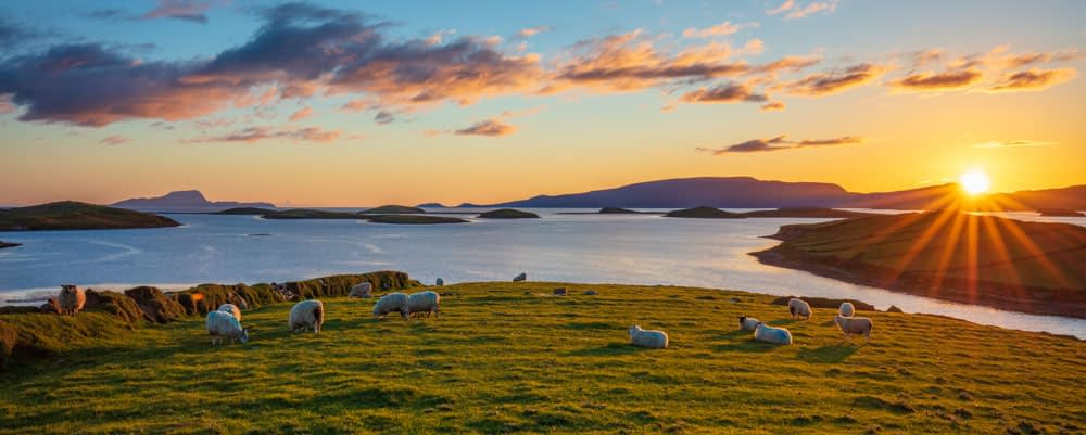 Sheep and sunset on the shore of Clew Bay, County Mayo, Ireland.