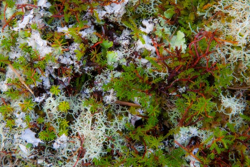 Detail of bog flora, Doolough, County Mayo, Ireland.